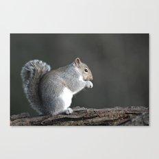 Grey Squirrel Canvas Print