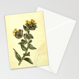 Flower 515 lithospermum orientale Yellow Gromwell or Bugloss10 Stationery Cards