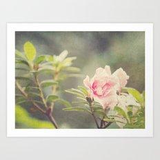 Australia Wildflower Art Print