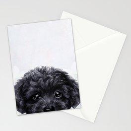 Toy poodle Black Stationery Cards