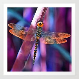 Dragonfly In Orange and Blue Art Print