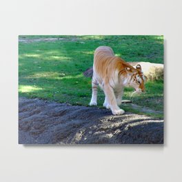 To Strut Metal Print