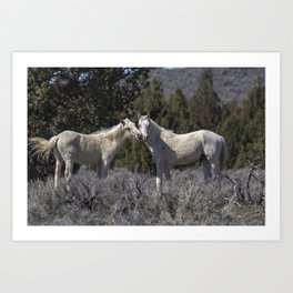 Wild Horses with Playful Spirits No 1 Art Print