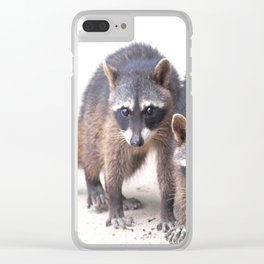 Cute wild Racoons in Costa Rica Clear iPhone Case