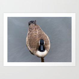 Goose Feathers Art Print