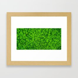 Shamrock Green Irish Clovers Photography Framed Art Print