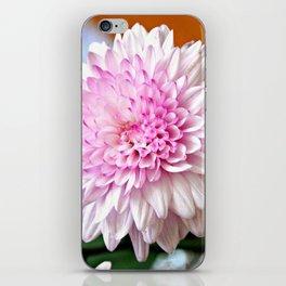 Pretty pink dahlia iPhone Skin
