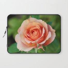 Garden pink rose flower blooming and two rose buds Laptop Sleeve