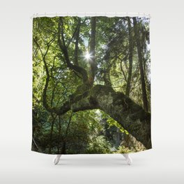 Beautiful Trees / 4 Shower Curtain