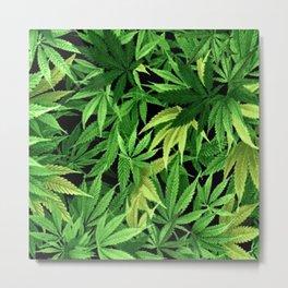 Cannabis Metal Print