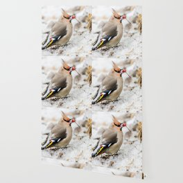 Bohemian waxwing Wallpaper