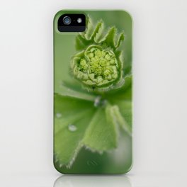 Lady`s mantle is revealing iPhone Case
