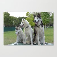 husky Canvas Prints featuring Husky by Alexandra Forcier