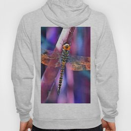 Dragonfly In Orange and Blue Hoody