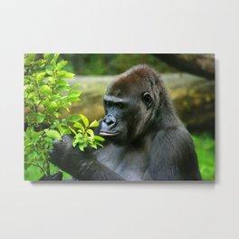 Thinker- gorilla  Metal Print