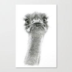 Cute Ostrich SK053 Canvas Print