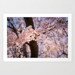 Cherry Flavored Sunshine Art Print