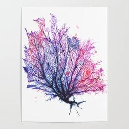 Fan Coral - Purple Poster