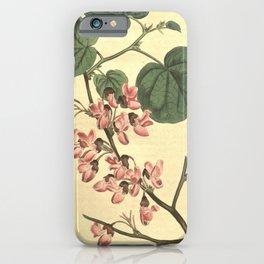 Flower 1138 cercis siliquastrum Common Judas Tree10 iPhone Case