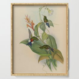 Vintage Print - A Monograph of the Hummingbirds (1849) - Coppery-Bellied Puff-leg Serving Tray
