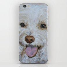 Bella the Maltese iPhone & iPod Skin