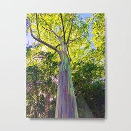 Rainbow Eucalyptus Trees Metal Print