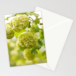 Viburnum opulus Roseum flowers Stationery Cards