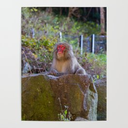 Deep Monkey Thoughts Poster