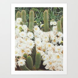 Cactus and Flowers Art Print