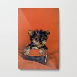 Tiny Yorkie Puppy Sitting in a Red & Black Basket surrounded with Christmas Red Fabric Metal Print