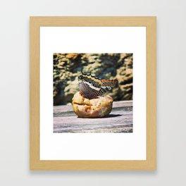 Lepidoptera Framed Art Print