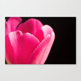 Shocking Pink Tulip Canvas Print