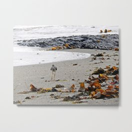 Greater Yellowlegs Strolling on the Beach Metal Print