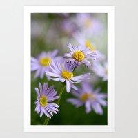 3 daisys Art Print