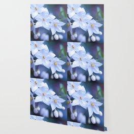 Jasmine Nightshade Flowers #3 #floral #art #society6 Wallpaper