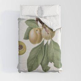 Prune (Prunus Claudia) from Pomona Italiana (1817 - 1839) by Giorgio Gallesio (1772-1839) Comforters