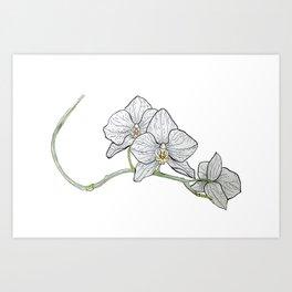 Orchidea illustrata Art Print