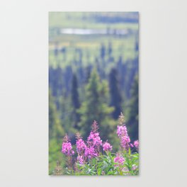 Rising Fireweed Canvas Print
