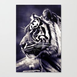 Sumartran Tiger  Canvas Print