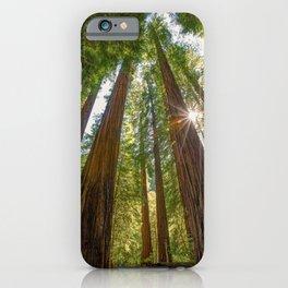 Majestic California Redwoods iPhone Case