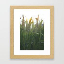 The Corns. Framed Art Print