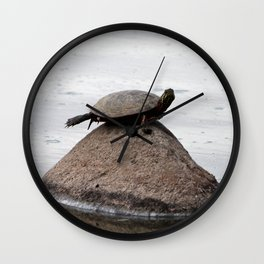 Baby Turtle on a Rock Wall Clock