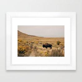 Bison Bull on Antelope Island Framed Art Print