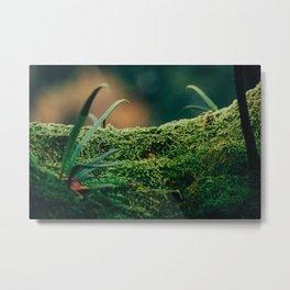Japanese Moss Metal Print