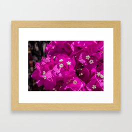 bouganvillea in lefkada greece Framed Art Print