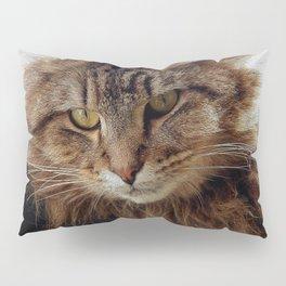 Maine Coon Cat Pillow Sham