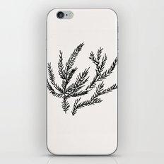 Summer Coral Fern iPhone & iPod Skin