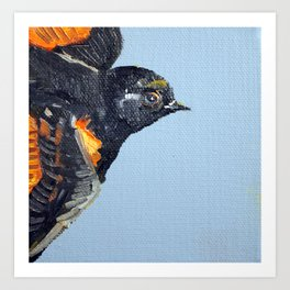 Eastern Songbird Series - American Redstart Art Print