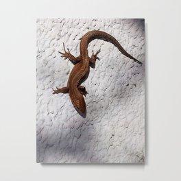lizard 157 Metal Print