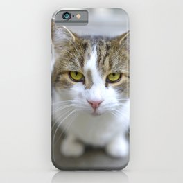 Larry the Downing Street Cat iPhone Case